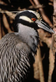 birdpalmkeymarsh
